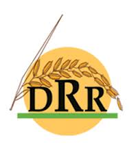 Directorate of Rice Research Hyderabad Jobs
